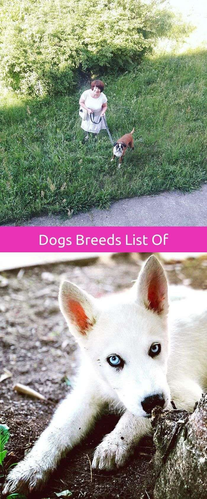 best dog training obedience lab images on pinterest