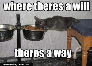 funny cooking quotes - cat eating food funny pictures