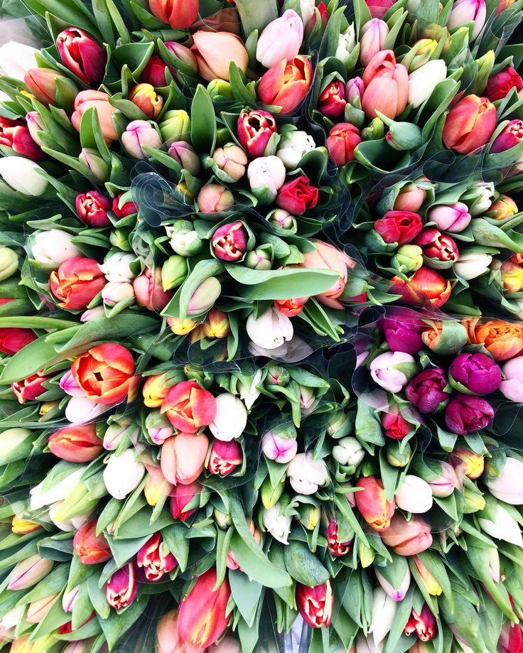 flowers in copenhagen #tulips