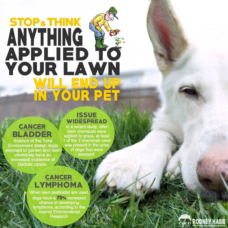 STUDY FINDS HERBICIDES IN THE URINE OF PETS AFTER HOME LAWN CHEMICAL TREATMENT.