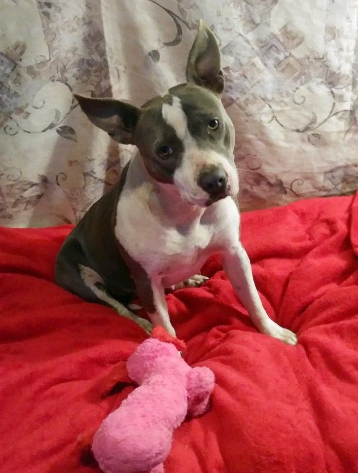 Adopt Sadie On Rescue Dogs Dogs Pet Adoption