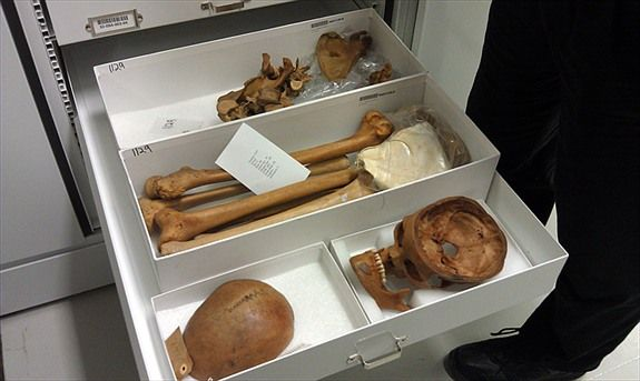 museum support center smithsonian. Colecciones bioantropológicas