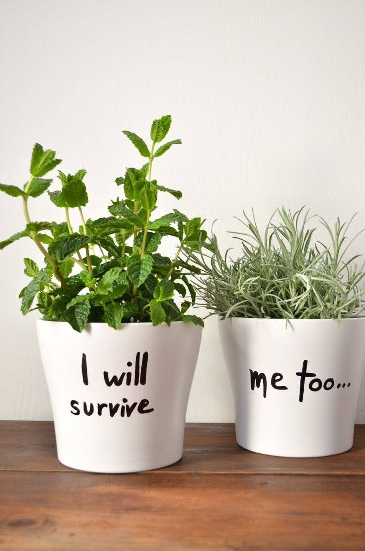 This DIY planter is hysterical, I love it ! #diy #…