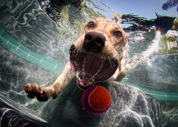 Underwater Ball Chase by Seth Casteel