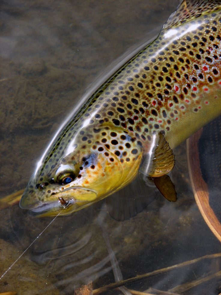 Absolutely beautiful photography, largely outdoor- and fly fishing-themed.