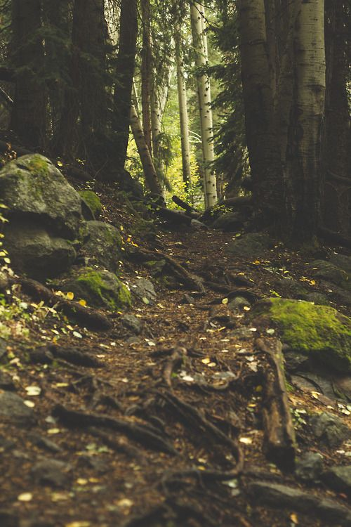 cityofmountains:  An intimate walk through the forest with my...