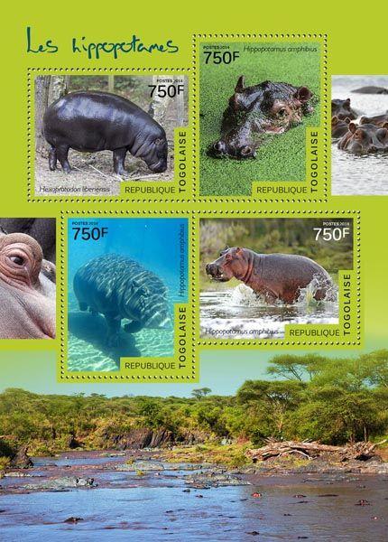 TG 14508 aHippopotamuses (Hexaprotodon liberiensis, Hippopotamus amphibius)