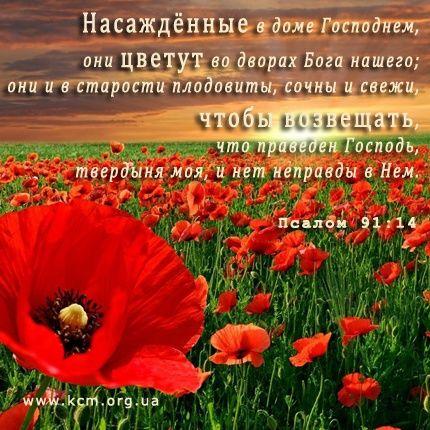 наслаждайся полнотой жизни с Господом через Его прощение тебя и принятие
