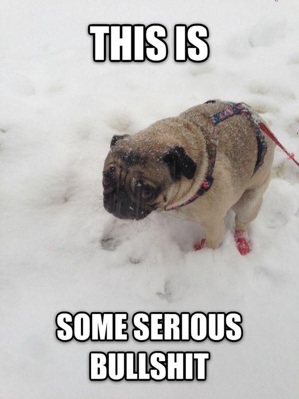 871e7c71a4c7d8e9b8c8f3277ce597aa first snow meme guy 9 best winter snow memes images on pinterest snow meme, funny,Snow Meme Images