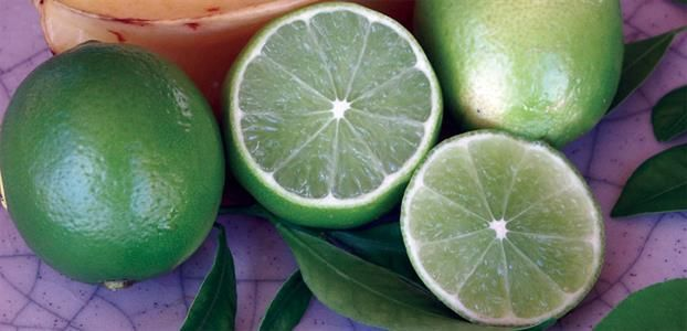 TAHITIAN LIME - FLYING DRAGON Ideal for pots. Produces the main crop in winter in cooler climates but can be everbearing the further North it is grown, fruit has best flavour when allowed to colour yellow.
