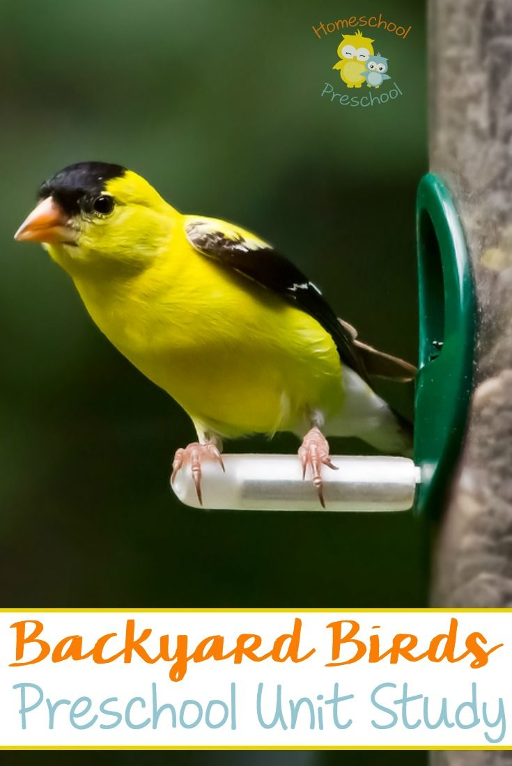 Birds for Kids: Learn about habitats and types of birds