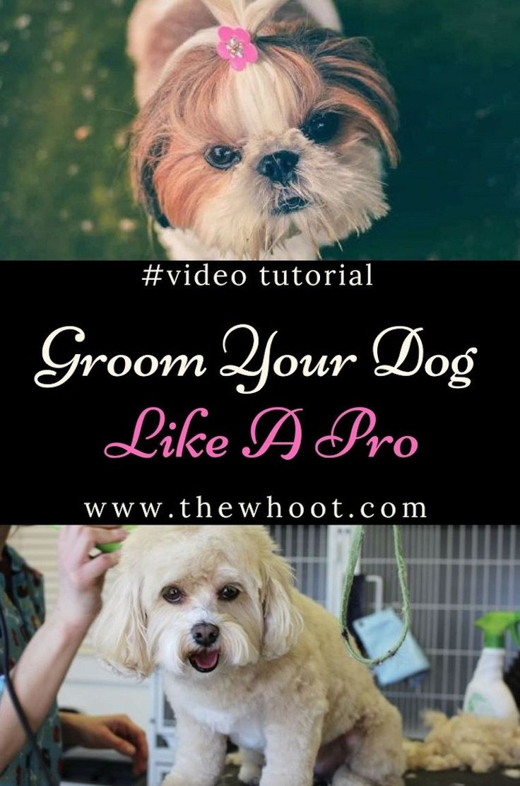 Groom Dog At Home With Clippers Video Instructions Dog
