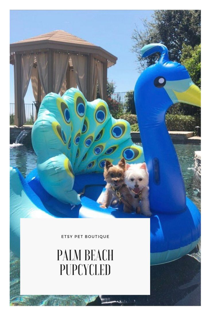 Two cute tiny dogs on giant pool float.yorkies