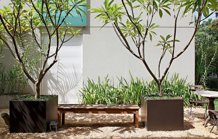 O cultivo dos jasmins-manga foi possível graças às caixas de aço galvanizadas, da Firgal. Elas permitem que as grandes árvores se desenvolvam com mais espaço de terra. Projeto da arquiteta e paisagista Patrícia Santana, da Panorama Paisagismo.