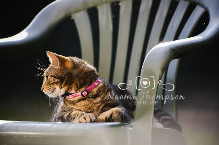 This cat visits my neighbours garden every day and sits in her chair. Nikon D750 sigma 70-300mm photoshop app quick edit.