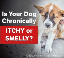 Itchy or Smelly Dog