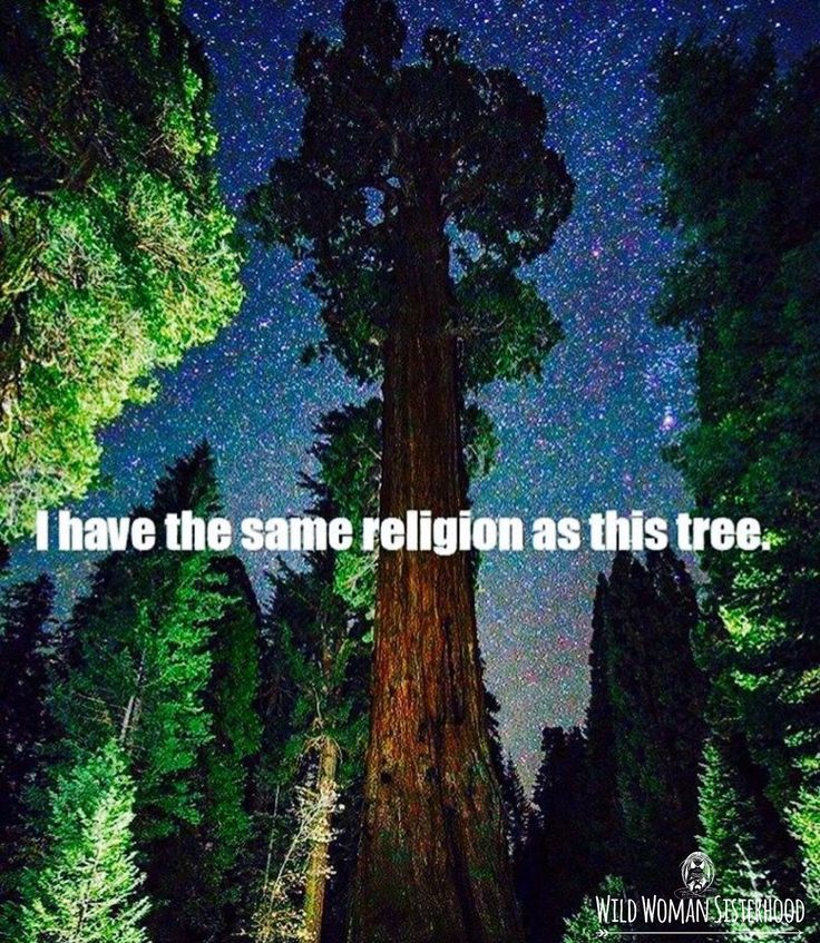 I have the same religion as this tree. WILD WOMAN SISTERHOODॐ