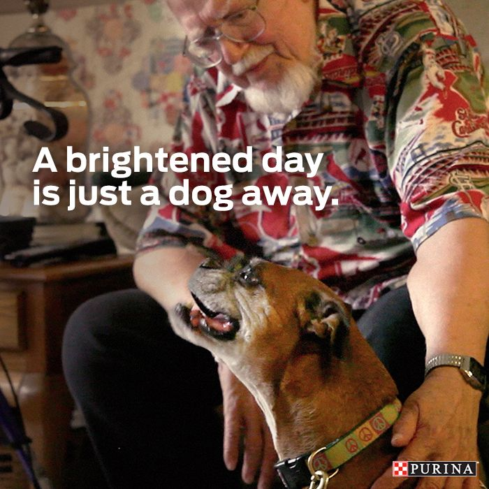 Brighten someone's day by asking a local nursing home how you and your cat or dog can volunteer together!