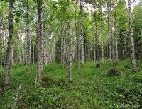 Hyvää oloa metsästä (ryhmätehtävä)