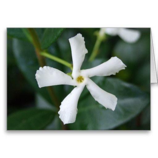 Star Jasmine Greeting Card