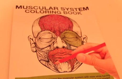 Muscular system coloring book https://www.youtube.com/watch?v=JQ-rhoVB18s