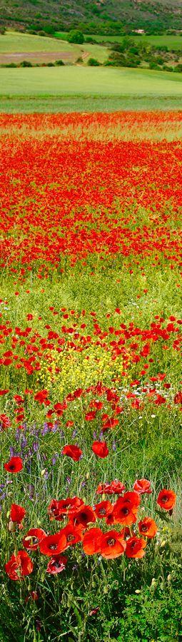"""""""Red spring"""" landscape, Spain"""