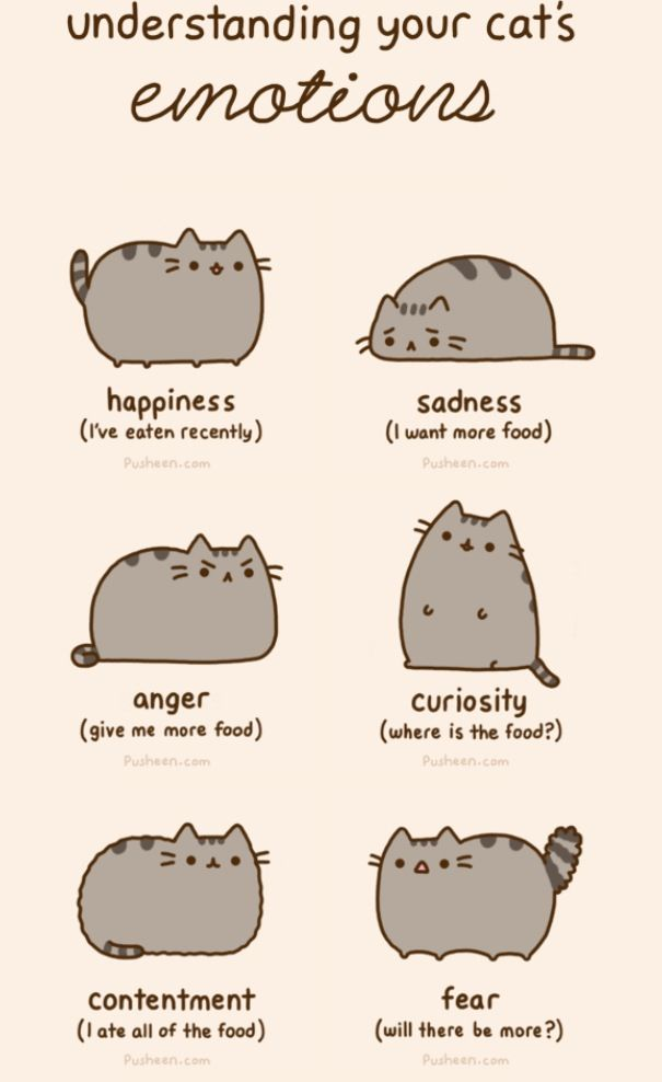 """Ignore the """"20 Reasons Why Pusheen The Cat Would Make The Perfect Boyfriend"""".... Pusheen is a girl....."""