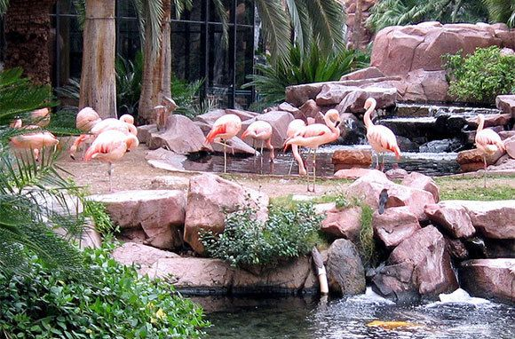 Wildlife+Habitat+At+Flamingo+Las+Vegas