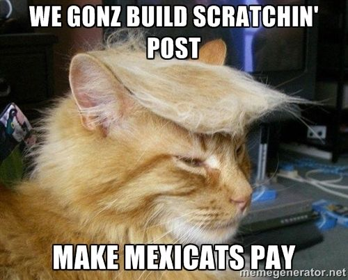 8721b729d5304b95103d0b088238c977 tag image great memes 50 best meme's images on pinterest funny things, kitty cats and
