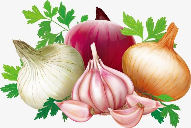 Vector Garlic, Garlic, Onion, Vector PNG and Vector with ...
