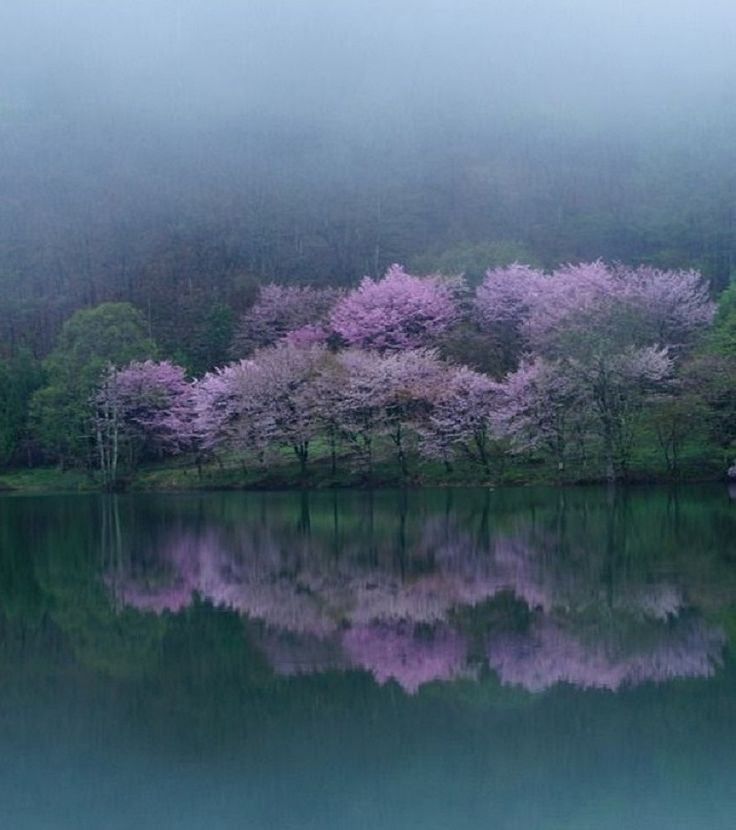 Cherry blossom, Lake Nakatsuna, Nagano, Japan