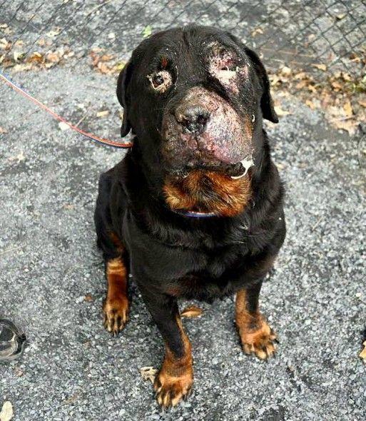 Dog Mange Treatment Over Counter Uk
