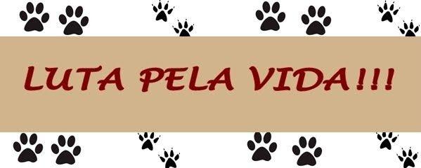 ALGUMAS DICAS PRÁTICAS SOBRE COMO CUIDAR BEM DE UM CÃO Muitas pessoas cuidam de cães, mas poucas cuidam BEM dos cães. Nosso intuito aqui é dar algumas dicas práticas sobre como cuidar BEM de um cão.