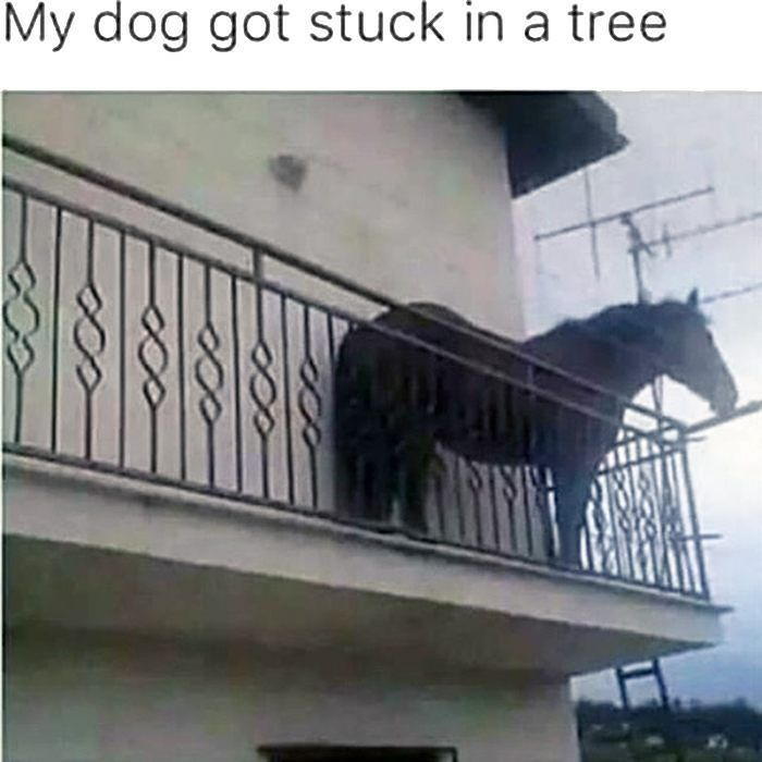Dog Rescue Time  http://stopwatch.onlineclock.net/alarm/  #Dog #Dogs #Rescue #Horses #HorseLovers #Equine #Weird #WTF #FireDepartment #SearchAndRescue #Dogstagram #DogsOfInstagram #HorseLovers #HorsesOfInstagram #Animals #AnimalLovers #Horsey #HorseBackRiding #LOL