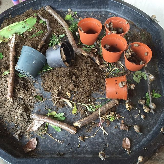 There's a snail farm at miss 4's nursery today! So fun #eyfs #nursery #earlyyears #snails #minibeasts #tuffspot #nature #theimaginationtree