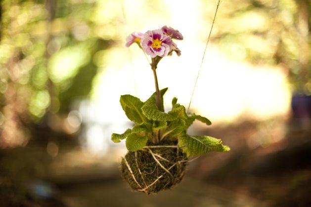 DIY: Kokedama string garden