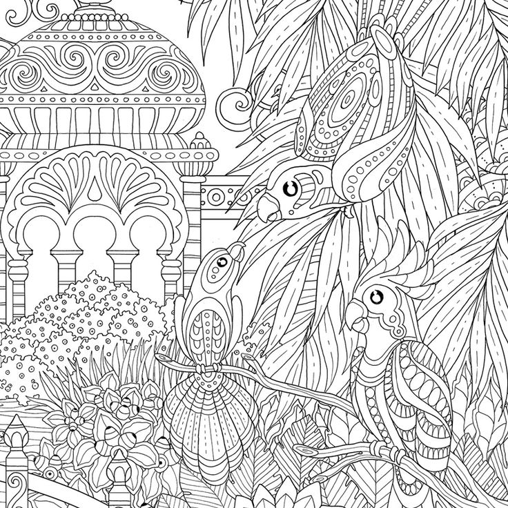 46 best images about coloriage perroquet on pinterest - Perroquet dessin ...