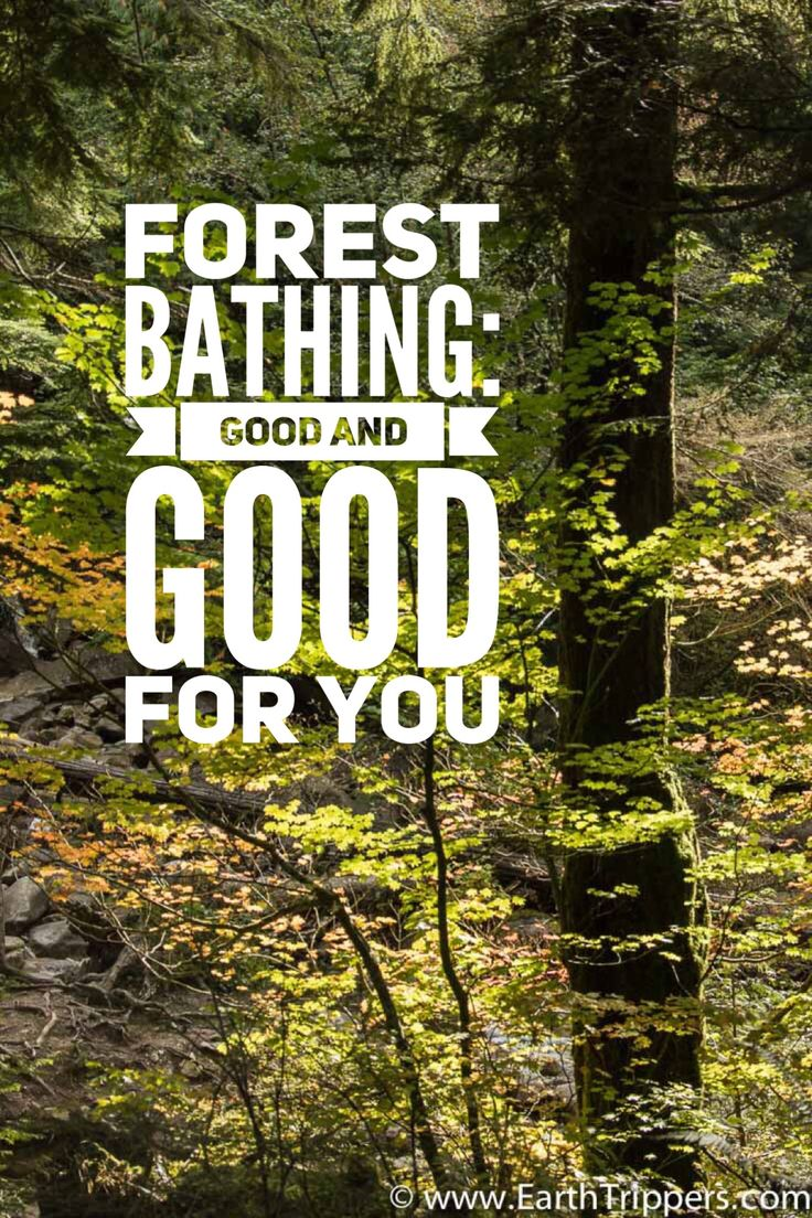 Forest bathing can be as simple as walking in the woods. Find a place to sit, contemplate and absorb the forest around you. Forest bathing has proven mental health and physical health benefits. | Forest Bathing | Shinrin Yoku | Forest Bathing Japanese | Forests | Trees | Nature Mists | Natural Therapy | Stress Relief | Relieve Stress | Stress Management |