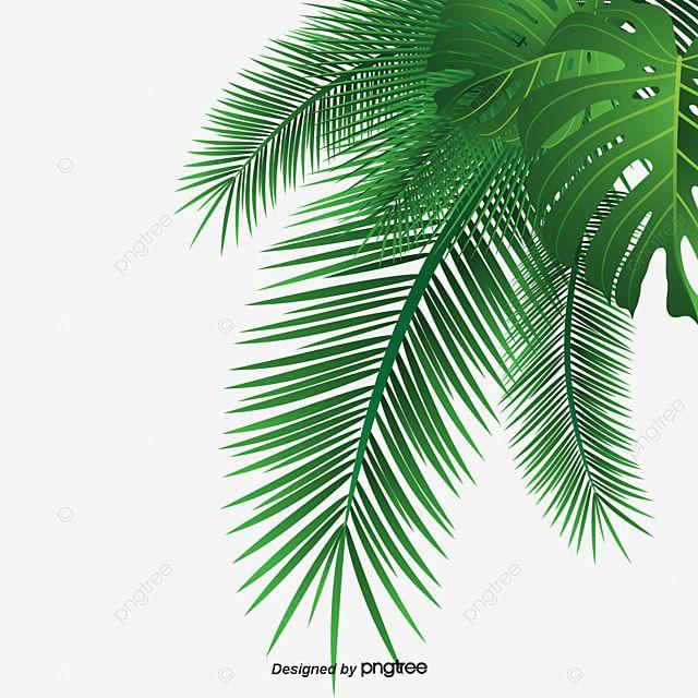 Hojas De Palma Hoja Coco Imagenes Predisenadas De La Palma Png Imagen Para Descarga Gratuita Pngtree In 2021 Palm Background Palm Leaves Leaf Clipart