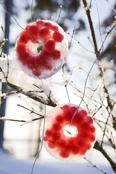 ✶ Fill small bunt pan with water and berries and freeze.  As the ice melts, birds will eat the berries.✶