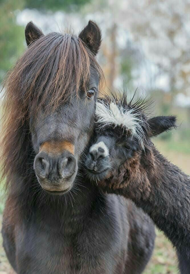 Pin By Classic Equine Equipment On Friends Unlikely Animal Friends Unusual Animal Friends Animals Friendship