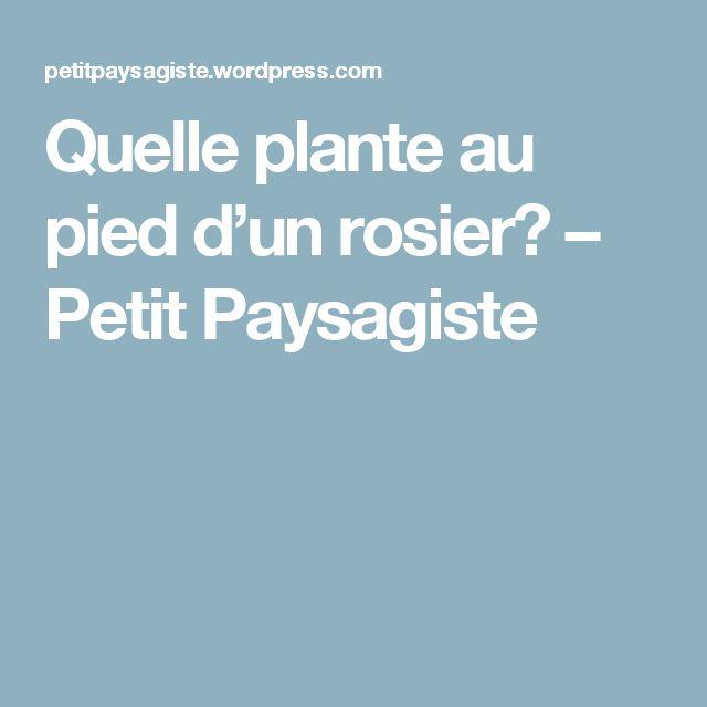 Quelle plante au pied d'un rosier? – Petit Paysagiste