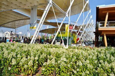 Nadia Mikushova. Flowers of the EXPO Milano 2015. Flowering plants of the Belgium pavilion.