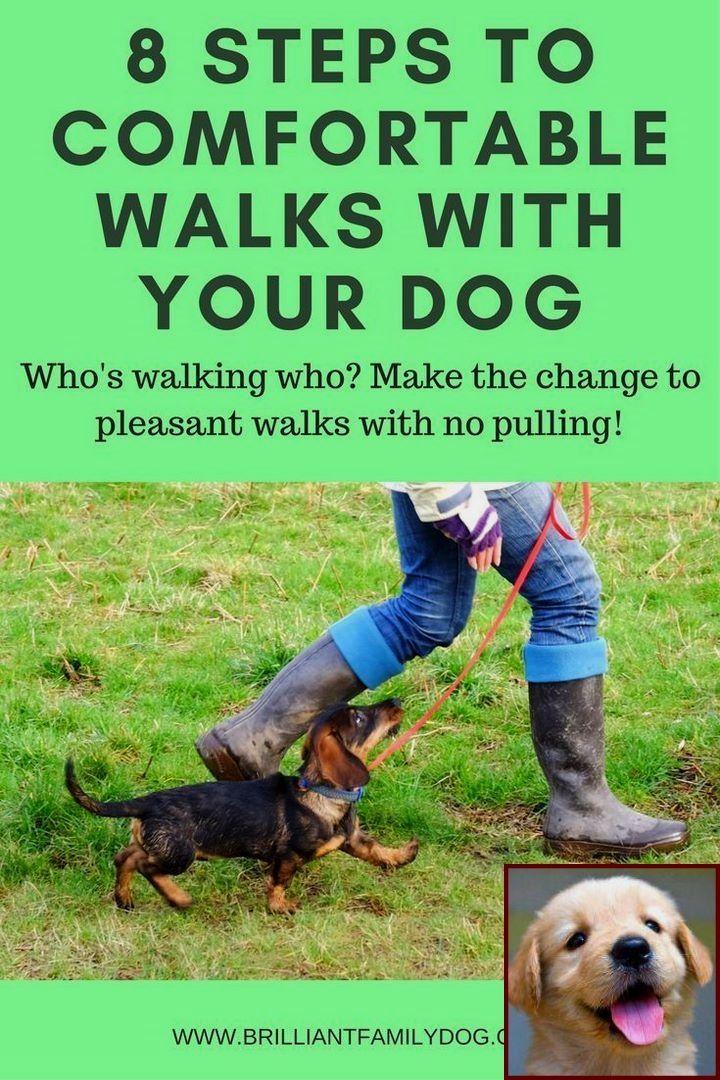 Dog Behavior Forums And Dog Behavior Boot Camp Training Your