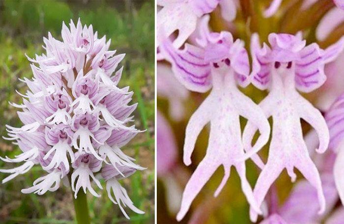 10 vackra blommor – kika närmare och häpna över naturens verk - Sköna hem
