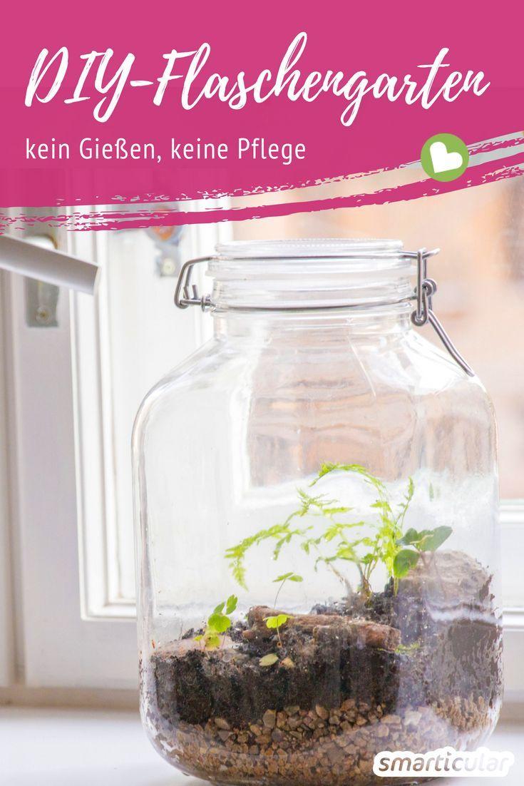 Ewiger Minigarten Im Glas So Gelingt Das Biotop Fur Den Schreibtisch Flaschengarten Mini Garten Und Terrarium Pflanzen