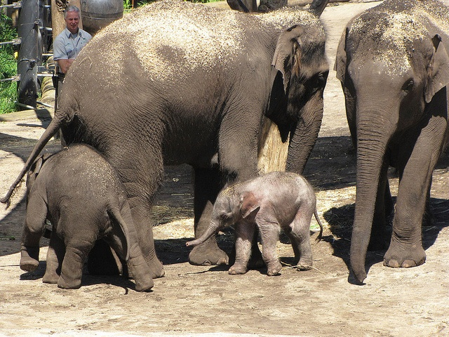 Baby elephant's first day