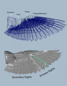 Bird 3D wing rig