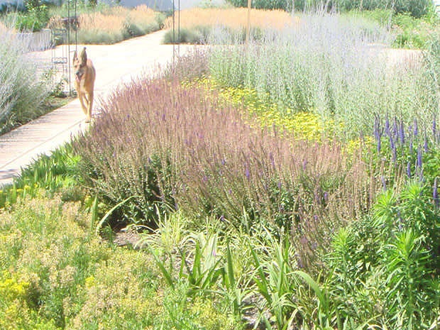 rebecca cole nyc garden design landscape design interior design event planning