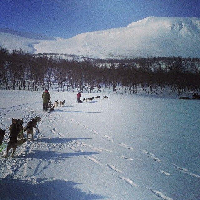 Maybe the best dog sledding tour in Europe. Into Vindelfjällens Naturreservat. Sorsele in Swedish Lapland with Erlebnis-Wildnis #dogsledding #adventure
